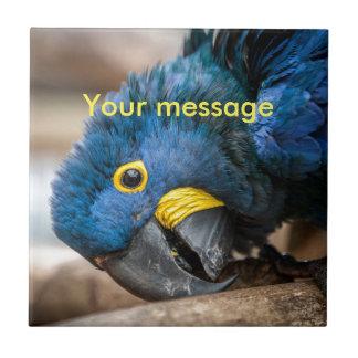 Belägga med tegel med papegojan för kakelplatta