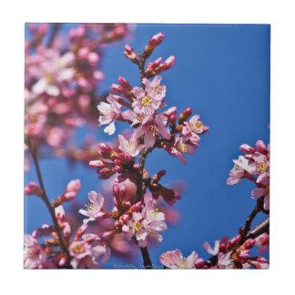 Belägger med tegel japanska körsbärblommar för kakelplatta