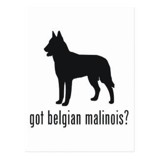 Belgare Malinois Vykort