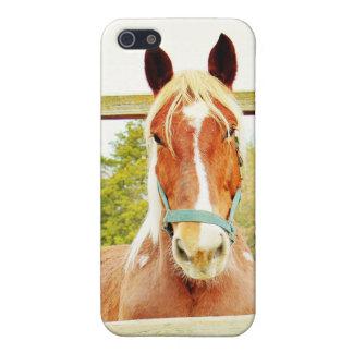 Belgisk häst iPhone 5 skal