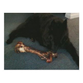 """Belgisk herde med ett ben aka """"den svart vargen """", vykort"""