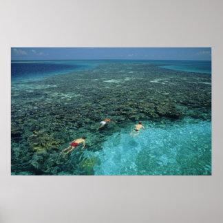 Belize barriärrev, fyrrev, blått poster