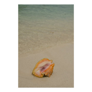 Belize karibiskt hav, glovers rev. Conch Poster