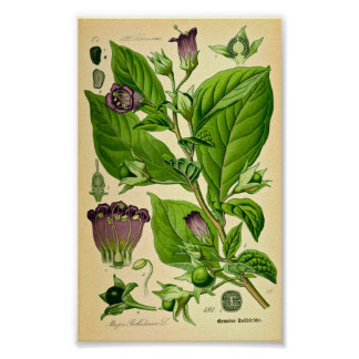 Belladonna/belladonna (Atropabelladonnaen) Poster