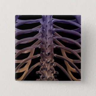 Ben av baksidaen standard kanpp fyrkantig 5.1 cm