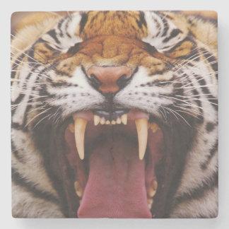 Bengal tiger, Panthera tigris 2 Underlägg Sten