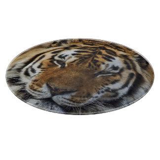 Bengal tiger, Panthera tigris, Louisville Zoo,