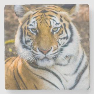 Bengal tiger (pantheraen Tigris Tigris) Underlägg Sten