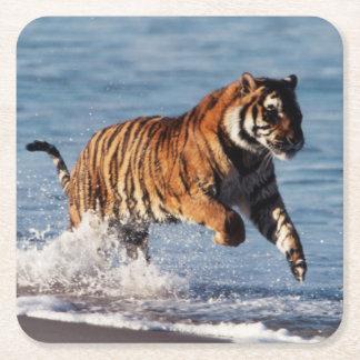 Bengal tiger (pantheraen Tigris) Underlägg Papper Kvadrat
