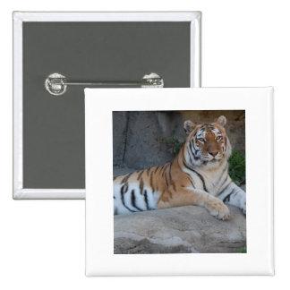 Bengal tigrar standard kanpp fyrkantig 5.1 cm