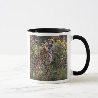 Bengal tigress i högväxt gräs som är pröva att