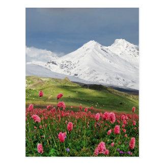 Berg och äng vykort