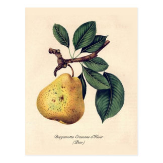 Bergamotte Crassane d'Hiver (pearen) Vykort