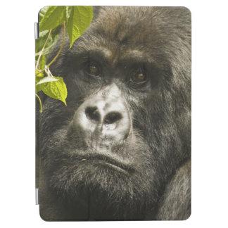 Berggorilla, gorillaberingeiberingei, iPad air skydd