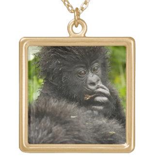 Berggorillan, bebisridning på mammor drar tillbaka guldpläterat halsband
