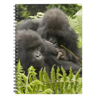 Berggorillan, familj i dag bygga bo anteckningsbok med spiral