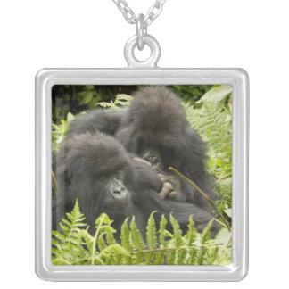 Berggorillan, familj i dag bygga bo silverpläterat halsband