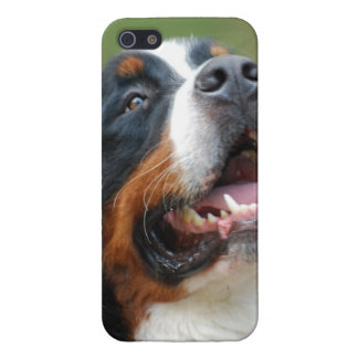 Berner Sennenhund iPhone 5 Cover