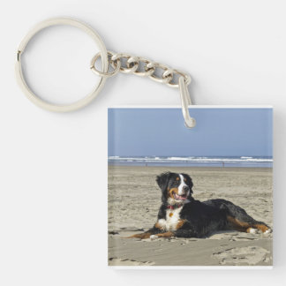bernese-berg-hund-layin på beach.png