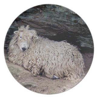 Beskydda för får för ull för södra Devon kusten Tallrik