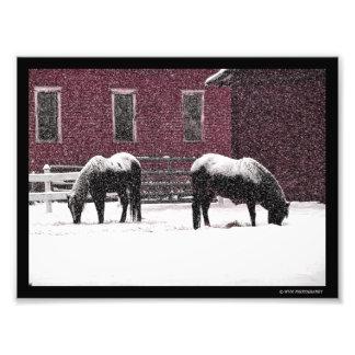 Beta för vinter fototryck