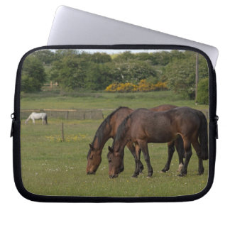 Betande hästar laptop sleeve