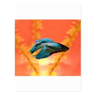 Betta är den bättre orange versionen vykort
