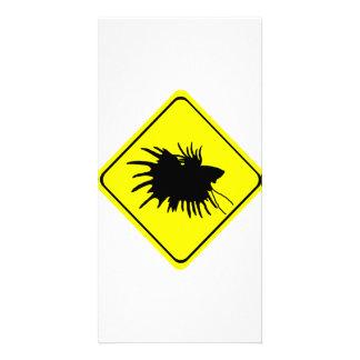 Betta varning undertecknar den Siamese Fotokort