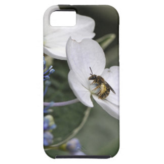 Bi med pollen i en vitblomma iPhone 5 Case-Mate skal