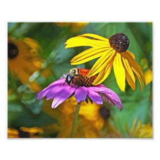Bi och blommar fototryck