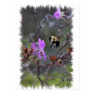 Bi och vildblomma vykort