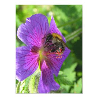 Bi på ett blommatryck fototryck