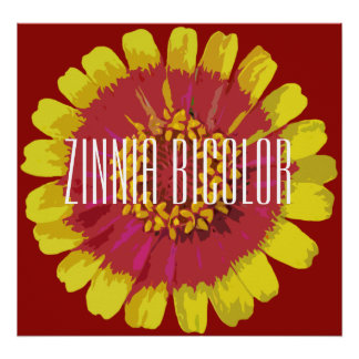 Bicolor Zinnia - kanfas Poster