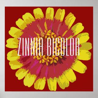 Bicolor Zinnia - (Matte) affisch, Poster