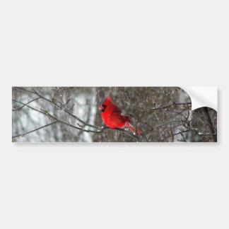 bildekal med fotoet av den male kardinalen
