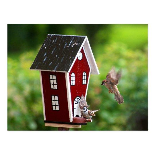 BirdHouse/Fågelhus Vykort