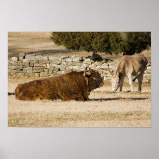 Bison- & åsnatryck poster