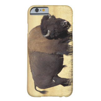 bison Bisonbison, tjur i den Yellowstone Barely There iPhone 6 Skal