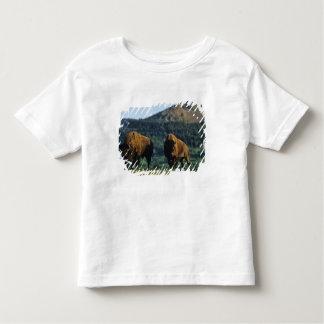 Bisontjurar på Waterton sjöarnationalparken in T-shirts