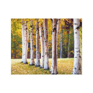 Björkträd, nedgång, hög deffotografi, kanfas canvastryck