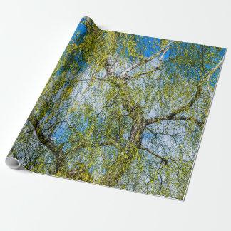 Björkträd - våren är i luften presentpapper