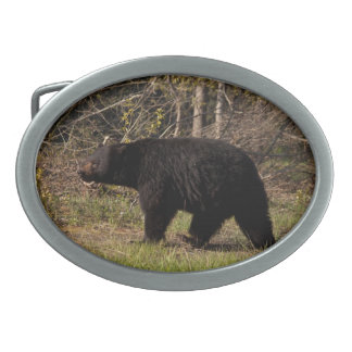 Björn för CBB-knubbigsvart