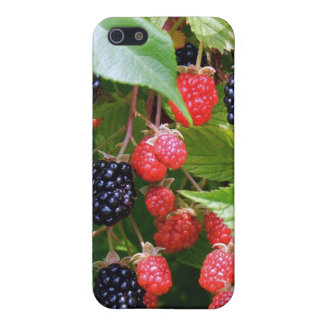 Björnbäret lappar iPhone 5 skydd