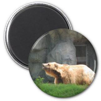 Björnfoto Magnet Rund 5.7 Cm
