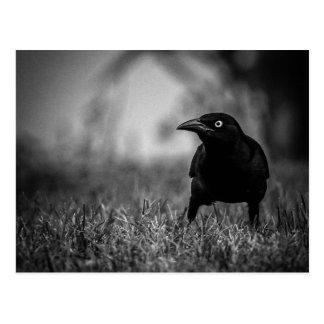 Blackbird i gräsvykort vykort