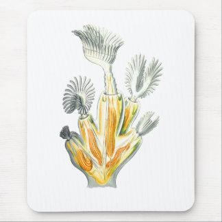 Blåklocka- eller kristallMossdjur Musmatta