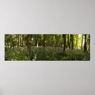 Blåklockor i en skog poster
