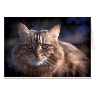 Blank noterar kortet med kattfotoet hälsningskort