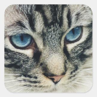 Blåögd tabby kattnärbild fyrkantigt klistermärke