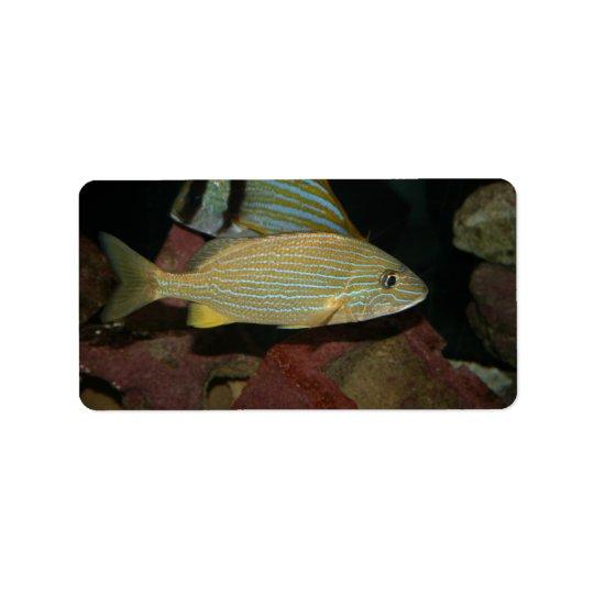 blått görat randig gult fisksaltwaterdjur adressetikett